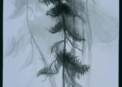"""Asian Pine""- 8"" x 10"", ink on paper, $350 (available as a print)"