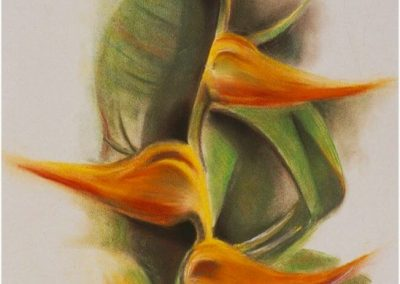 """Heliconia Rostrata"", 12"" x 15"", pastel, $550, (Also available as a Giclee print)"