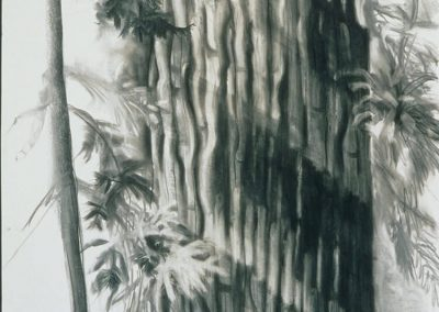 "Light on Tree"", 30"" x40"", charcoal on paper, $750"