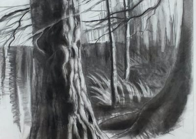 """Outdoor Tree in Black and white"", 24' x24"" charcoal on paper, $575"