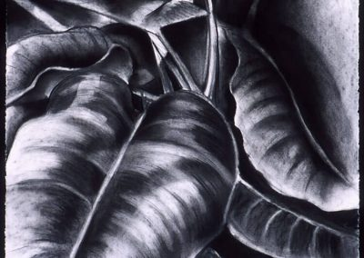 """Tropical Leaves #1"", 20"" x 30"", charcoal on paper, $400"