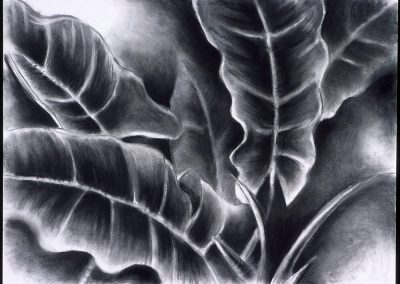 "Tropical Leaves #2"", 20"" x 30"", charcoal on paper, $400"